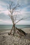 Côte de mer baltique avec un arbre inextricable - longue exposition photo stock