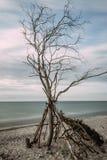 Côte de mer baltique avec un arbre inextricable - longue exposition photo libre de droits