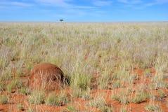 Côte de termite Photo libre de droits