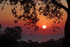 Côte de verde de côte en Corse Images stock