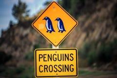 Côte du Nouvelle-Zélande image libre de droits
