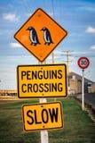 Côte du Nouvelle-Zélande images libres de droits