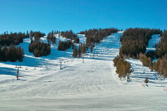Côte et arbres de ski Image stock