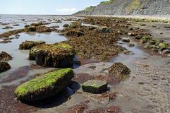 Côte jurassique célèbre pour des fossiles Photos stock