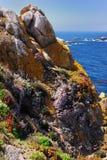 Côte raboteuse de pinte Lobos Photos libres de droits