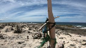 Côte rugueuse sur Bonaire clips vidéos