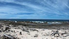 Côte rugueuse sur Bonaire banque de vidéos