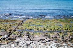 Côte sur la mer Photographie stock libre de droits
