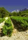 Côtes du Rhône vinhedo dentelles de montmarail vaucluse Imagem de Stock