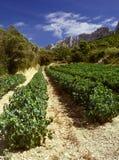 Côtes du Rhône vinhedo dentelles de montmarail vaucluse provado Fotos de Stock