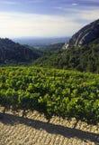 Côtes du Rhône vinhedo dentelles de montmarail vaucluse provado Imagens de Stock Royalty Free