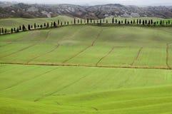 Côtes toscanes avec des lignes des arbres de cyprès Image libre de droits