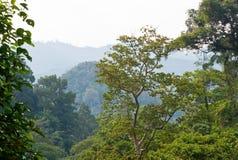 Côtes vertes tropicales image stock