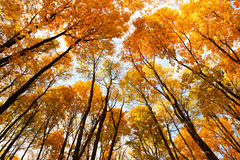 Cúpula de hojas anaranjadas. Imagen de archivo libre de regalías