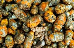 Cúrcuma recién cosechada de Kerala fotos de archivo