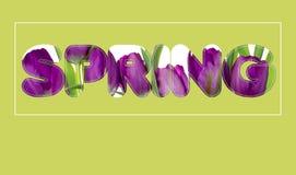 C'è testo dei fiori in primavera Fotografia Stock Libera da Diritti