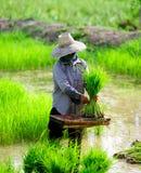 C'è un agricoltore che lavora nell'azienda agricola. Fotografie Stock