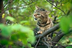 C'è un gatto su un albero fotografie stock libere da diritti