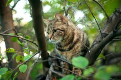 C'è un gatto su un albero fotografia stock libera da diritti