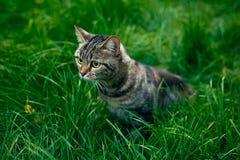 C'è un gatto sull'erba fotografia stock