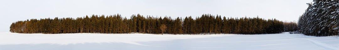 33c 1月横向俄国温度ural冬天 一个积雪的领域和f的全景射击 免版税库存照片