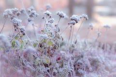 33c 1月横向俄国温度ural冬天 与白色雪花的Xmas背景 阳光在冬天森林里 库存图片