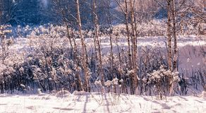 33c 1月横向俄国温度ural冬天 与白色雪花的Xmas背景 阳光在冬天森林里 免版税库存照片