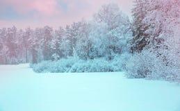 33c 1月横向俄国温度ural冬天 与白色雪花的Xmas背景 阳光在冬天森林里 免版税库存图片