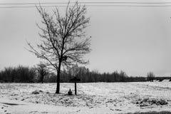 33c 1月横向俄国温度ural冬天 与的树酸坛 免版税图库摄影