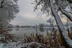 33c 1月横向俄国温度ural冬天 从河、湖、池塘在一个积雪的公园通过沿海树和芦苇的海岸的看法在云彩 库存图片