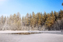 33c 1月横向俄国温度ural冬天 俄国 卡累利阿 免版税图库摄影