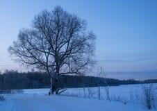 33c 1月横向俄国温度ural冬天 俄罗斯的中间车道 免版税库存照片