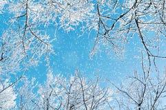 33c 1月横向俄国温度ural冬天 冬天树的冷淡的分支反对蓝天的 33c 1月横向俄国温度ural冬天 免版税图库摄影