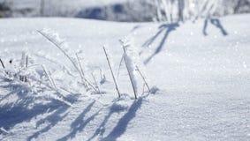 33c 1月横向俄国温度ural冬天 冻结冰烘干了草叶在雪的 免版税库存照片