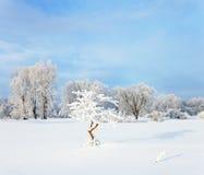 33c 1月横向俄国温度ural冬天 冷冬天日落 图库摄影