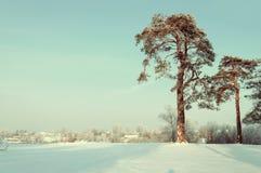 33c 1月横向俄国温度ural冬天 冷淡的高杉树在冬天森林和房子里背景的 图库摄影
