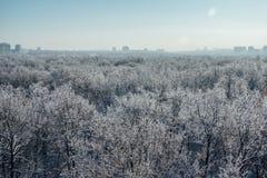 33c 1月横向俄国温度ural冬天 冻树在雪和树冰盖的森林里在现代房子背景在市沃罗涅日附近 图库摄影