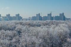 33c 1月横向俄国温度ural冬天 冻树在雪和树冰盖的森林里在现代房子背景在市沃罗涅日附近 库存照片