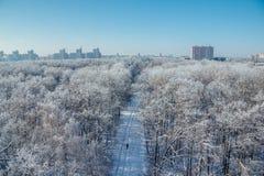 33c 1月横向俄国温度ural冬天 冻树在雪和树冰盖的森林里在现代房子背景在市沃罗涅日附近 免版税库存图片