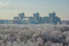 33c 1月横向俄国温度ural冬天 冻树在雪和树冰盖的森林里在现代房子背景在市沃罗涅日附近 免版税库存照片