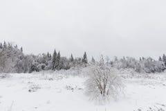 33c 1月横向俄国温度ural冬天 冻森林,俄罗斯 免版税库存图片