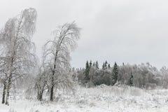 33c 1月横向俄国温度ural冬天 冻森林,俄罗斯 库存照片
