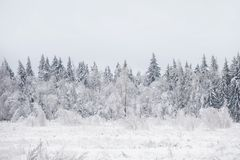 33c 1月横向俄国温度ural冬天 冻森林,俄罗斯 免版税图库摄影