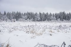 33c 1月横向俄国温度ural冬天 冻森林,俄罗斯 免版税库存照片