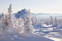 33c 1月横向俄国温度ural冬天 包括的冷杉雪结构树 山脉Zyuratk 免版税库存图片