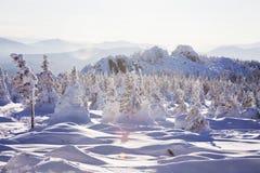 33c 1月横向俄国温度ural冬天 包括的冷杉雪结构树 山脉Zyuratk 图库摄影