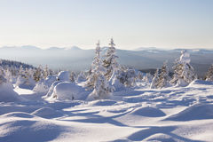 33c 1月横向俄国温度ural冬天 包括的冷杉雪结构树 山脉Zyuratk 库存图片