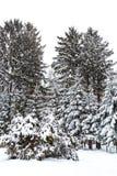 33c 1月横向俄国温度ural冬天 包括的冷杉雪结构树 图库摄影