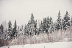 33c 1月横向俄国温度ural冬天 包括的杉木雪结构树 免版税库存照片