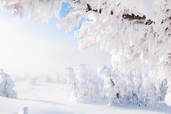 33c 1月横向俄国温度ural冬天 包括的森林雪结构树 库存照片